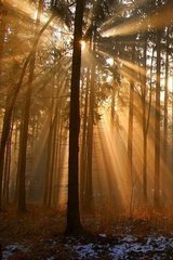 Beautiful Forest Sunbeams Android Wallpaper