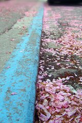 Beautiful Petals And Curb Android Wallpaper