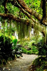 Beautiful Spanish Moss Android Wallpaper
