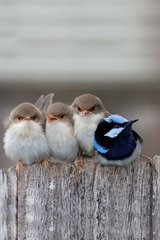 Cute Birds Android Wallpaper