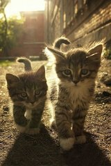 Cute Kittens Walking Android Wallpaper