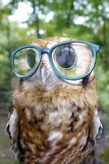 Cute Owl Glasses Android Wallpaper
