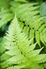 Flower Fern Android Wallpaper