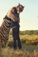 Love Tiger Hug Android Wallpaper